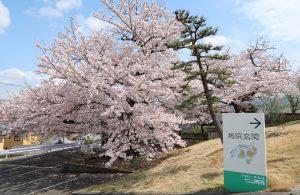 七山病院の桜(2017年)